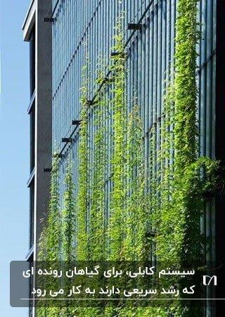 تصویر نمای خارجی ساختمانی با دیوارسبز کابلی با گیاهان رونده