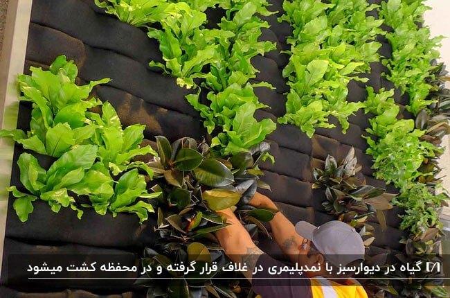 تصویری از نحوه کاشت گیاه روی دیوارسبز به شیوه نمد پلیمری