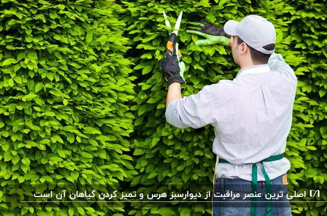 تصویری از نحوه هرس کردن گیاهان بکاررفته در دیوارسبز