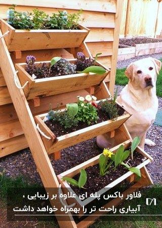 تصویر فلاورباکس پله ای چوبی به همراه یک سگ سفید کنارش