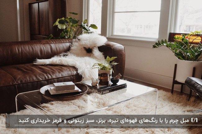 مبل چرمی قهوه ای تیره با شال مبل خزدار سفید کنار گلدان های گل زیر پنجره