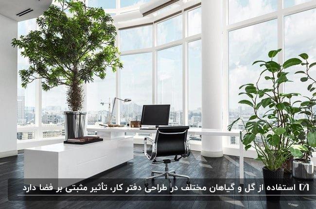 طراحی دفتر کار سفید رنگ با میزهای سفید و صندلی های مشکی و گلدان های گل طبیعی
