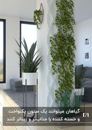 مبل ال شکل خاکستری و دکوراسیون ستون با گیاهان رونده در پذیرایی