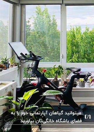 باشگاه خانگی با پنجره های بزرگ و گلدان های گیاهان آپارتمانی