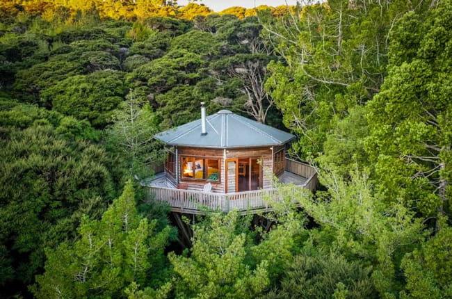 یک خانه درختی چند ظلعی با سقف آبی رنگ در میان انبوهی از درختان جنگل