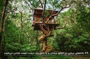 یک خانه درختی کوچک چوبی به شکل مربع رو یک درخت با پله های مارپیچی